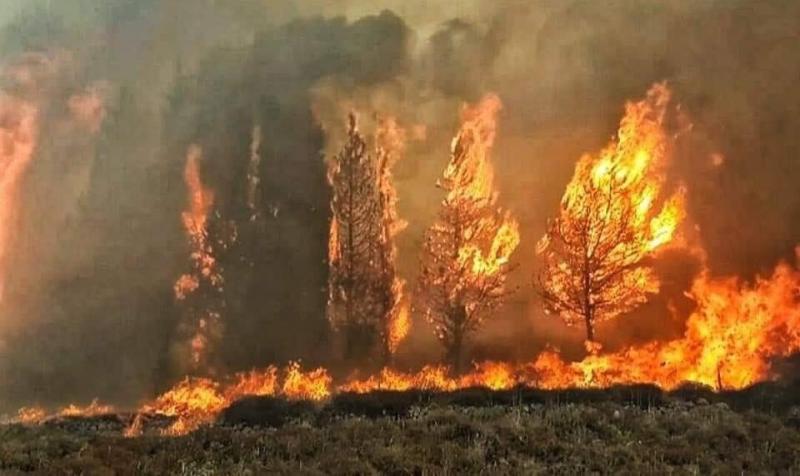 #حرائق في غابات #لبنان #لبنان_يحترق - صورة 2