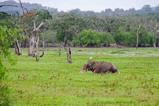 Photos from #SriLanka #Travel - Image 68