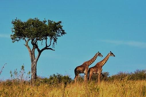 Photos from #Tanzania #Travel - Image 51