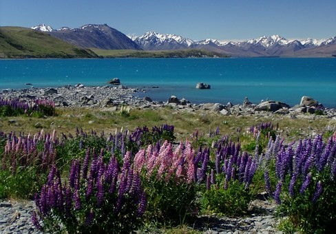 Photos from #New_Zealand #Travel - Image 43