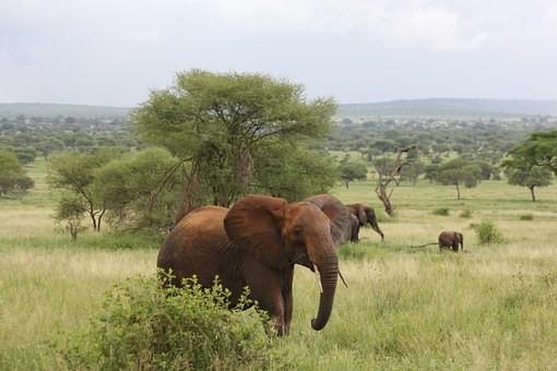Photos from #Tanzania #Travel - Image 21