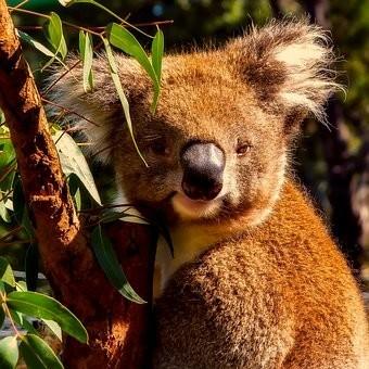 Photos from #Australia #Travel - Image 69