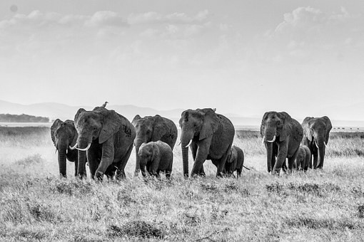 Photos from #Kenya #Travel - Image 7