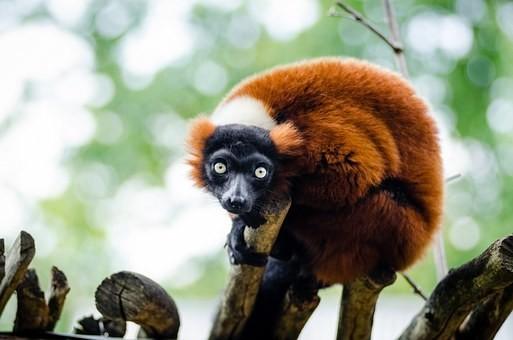 Photos from #Madagascar #Travel - Image 45