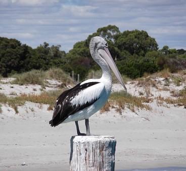 Photos from #Australia #Travel - Image 56