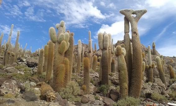Photos from #Bolivia #Travel - Image 147