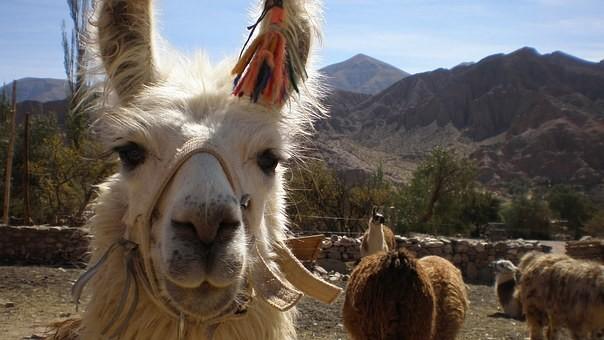 Photos from #Bolivia #Travel - Image 96