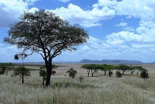 Photos from #Tanzania #Travel - Image 15