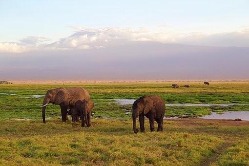 Photos from #Kenya #Travel - Image 80
