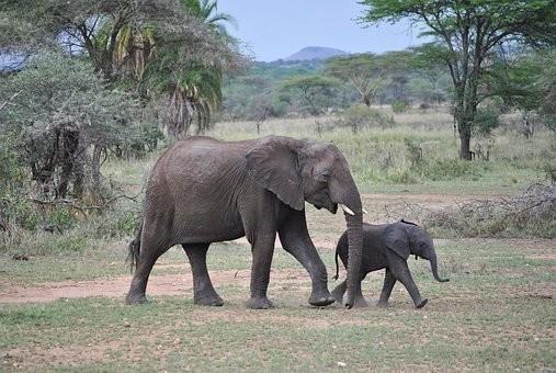Photos from #Tanzania #Travel - Image 61