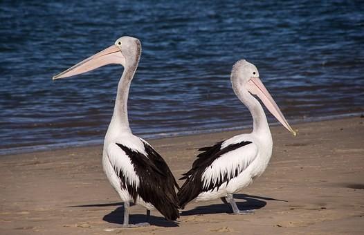 Photos from #Australia #Travel - Image 200