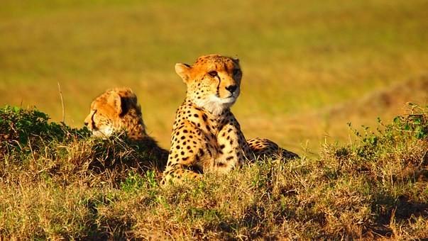 Photos from #Kenya #Travel - Image 19