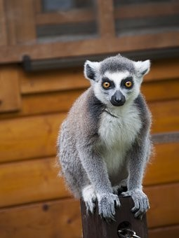 Photos from #Madagascar #Travel - Image 96