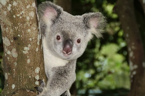 Photos from #Australia #Travel - Image 233