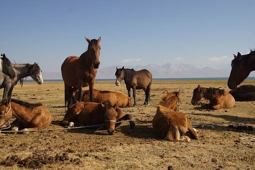 Photos from #Kyrgyzstan #Travel - Image 7