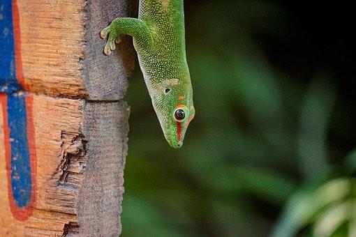 Photos from #Madagascar #Travel - Image 74