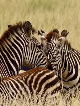 Photos from #Kenya #Travel - Image 24