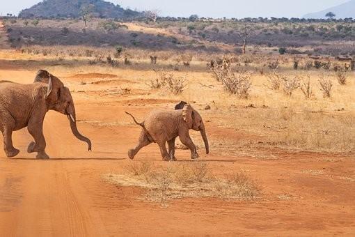 Photos from #Kenya #Travel - Image 91