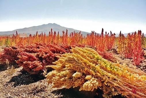 Photos from #Bolivia #Travel - Image 130