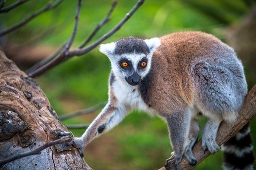 Photos from #Madagascar #Travel - Image 26
