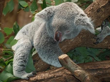 Photos from #Australia #Travel - Image 144