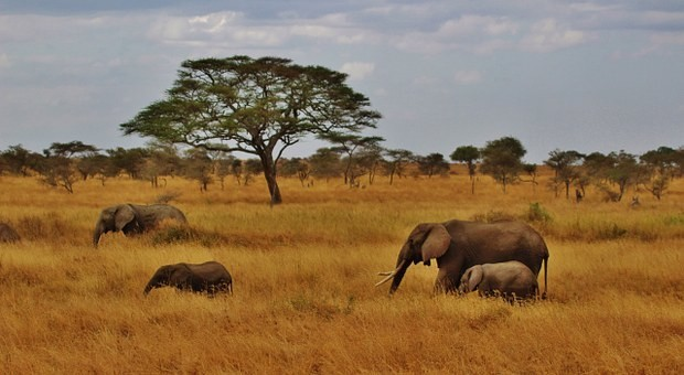 Photos from #Tanzania #Travel - Image 43