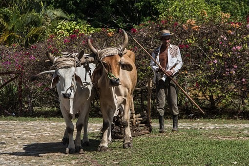 Photos from #Cuba #Travel - Image 3