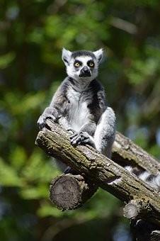 Photos from #Madagascar #Travel - Image 73