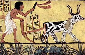 صور نادرة من #تاريخ #مصر #Egypt ال#قديم #الفراعنة - صورة 36