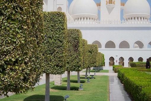 صور #مسجد #الشيخ_زايد في #أبوظبي #الإمارات - صورة 119