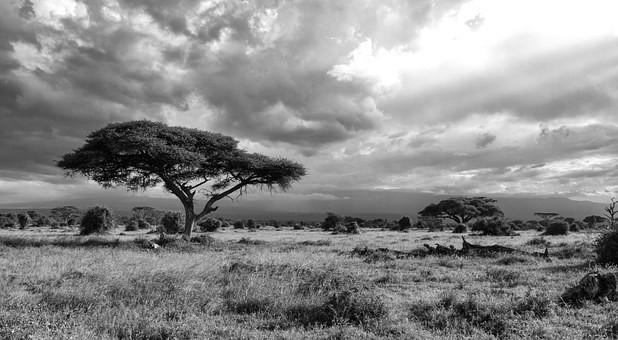 Photos from #Kenya #Travel - Image 33