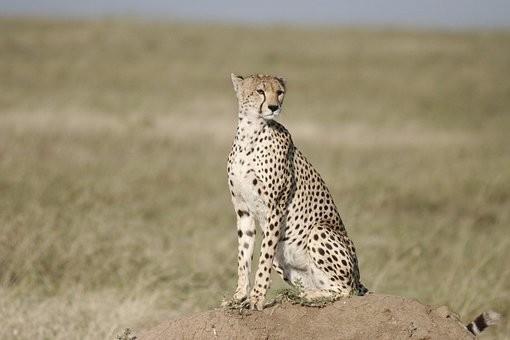 Photos from #Tanzania #Travel - Image 20