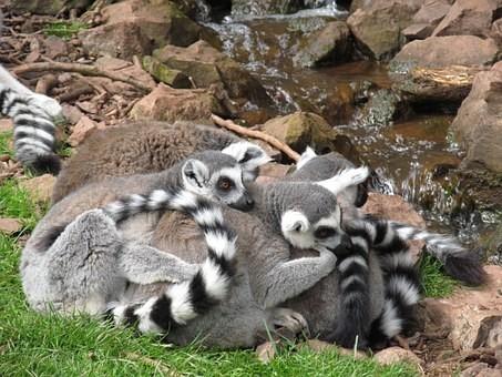 Photos from #Madagascar #Travel - Image 61