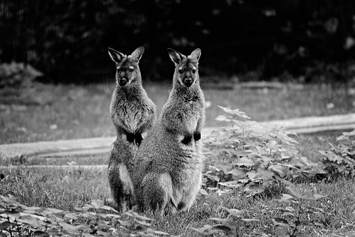 Photos from #Australia #Travel - Image 73