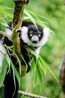 Photos from #Madagascar #Travel - Image 37