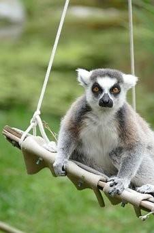Photos from #Madagascar #Travel - Image 78