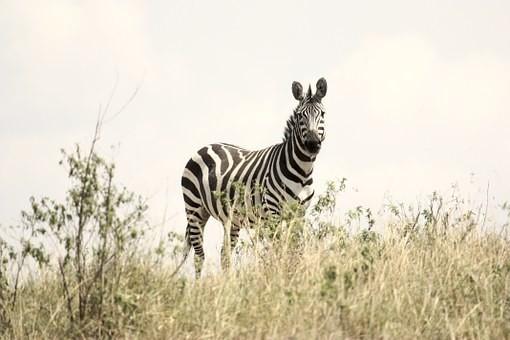 Photos from #Tanzania #Travel - Image 17