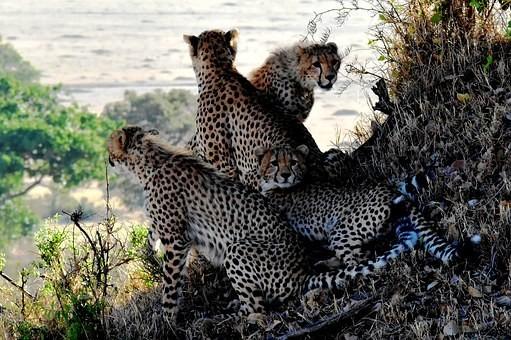 Photos from #Tanzania #Travel - Image 58