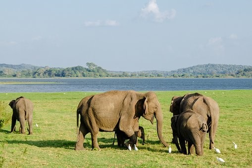 Photos from #SriLanka #Travel - Image 41