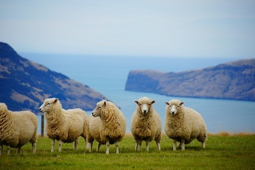 Photos from #New_Zealand #Travel - Image 100