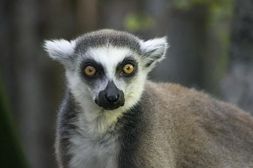 Photos from #Madagascar #Travel - Image 25