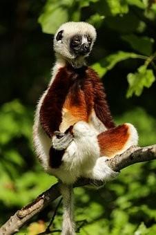 Photos from #Madagascar #Travel - Image 3