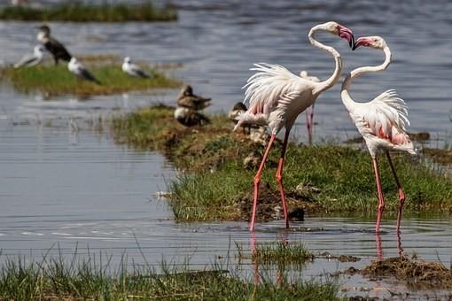 Photos from #Kenya #Travel - Image 51