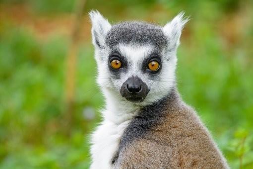 Photos from #Madagascar #Travel - Image 40