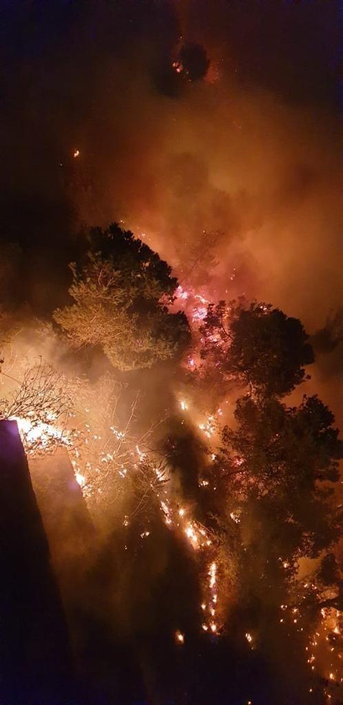 #حرائق في غابات #لبنان #لبنان_يحترق - صورة 8