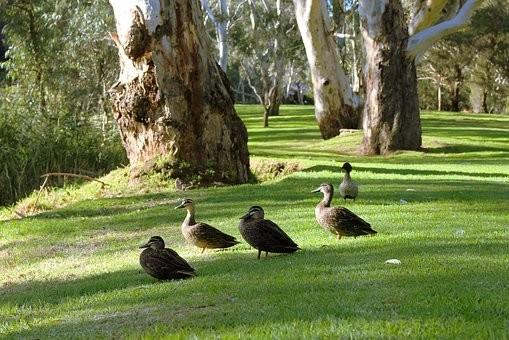 Photos from #Australia #Travel - Image 238