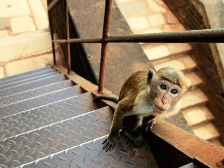 Photos from #SriLanka #Travel - Image 77