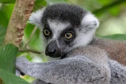 Photos from #Madagascar #Travel - Image 44