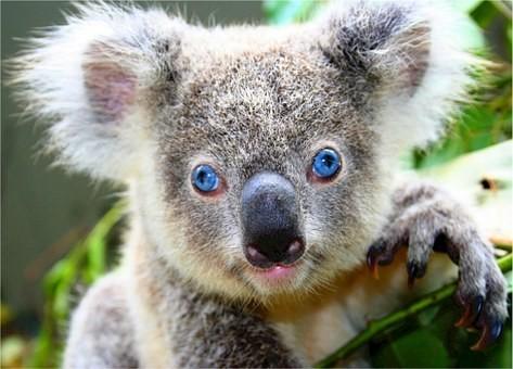 Photos from #Australia #Travel - Image 135