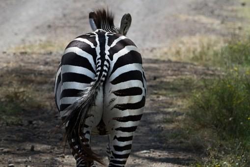Photos from #Kenya #Travel - Image 66